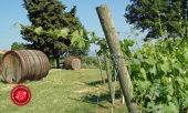 vineyard, wine barrels